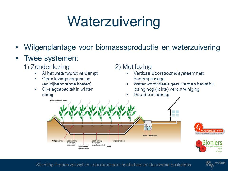 Waterzuivering Wilgenplantage voor biomassaproductie en waterzuivering