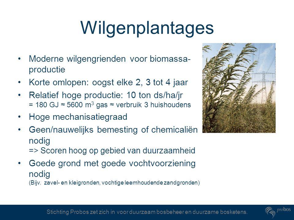 Wilgenplantages Moderne wilgengrienden voor biomassa-productie