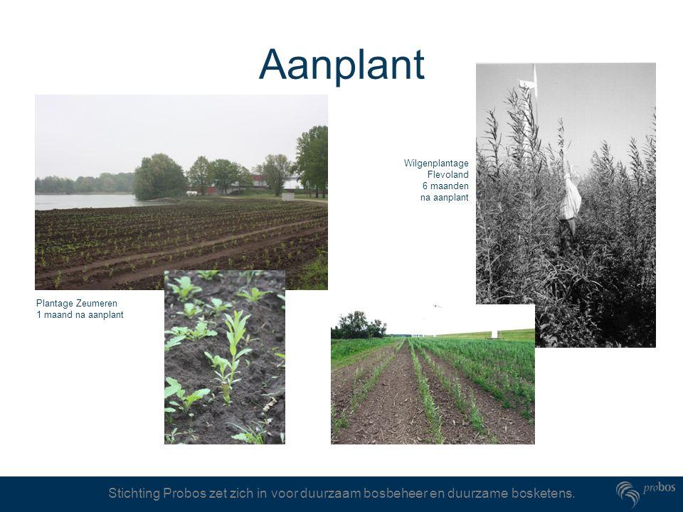Aanplant Wilgenplantage Flevoland 6 maanden na aanplant