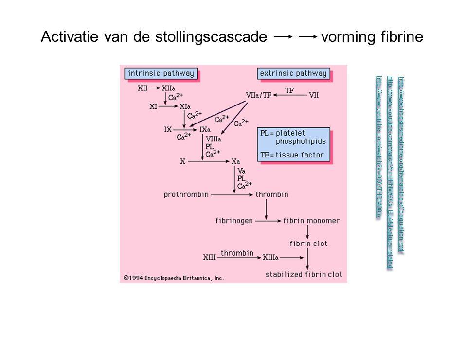 Activatie van de stollingscascade vorming fibrine