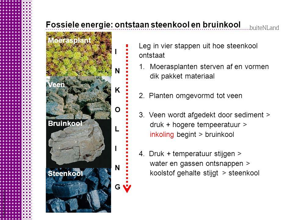 Fossiele energie: ontstaan steenkool en bruinkool
