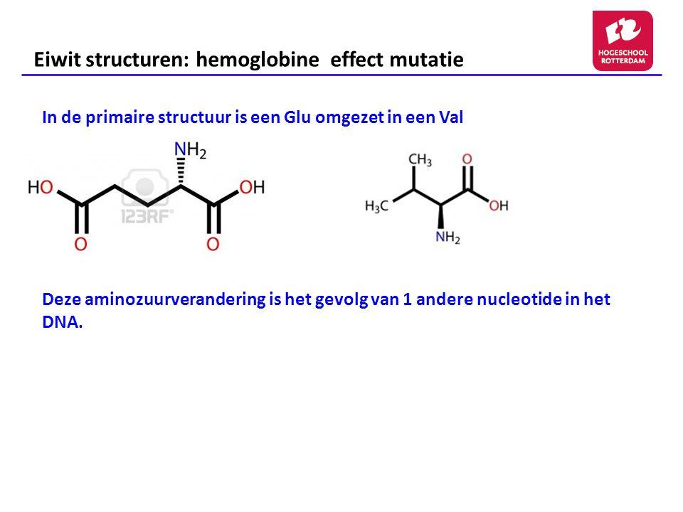 Eiwit structuren: hemoglobine effect mutatie