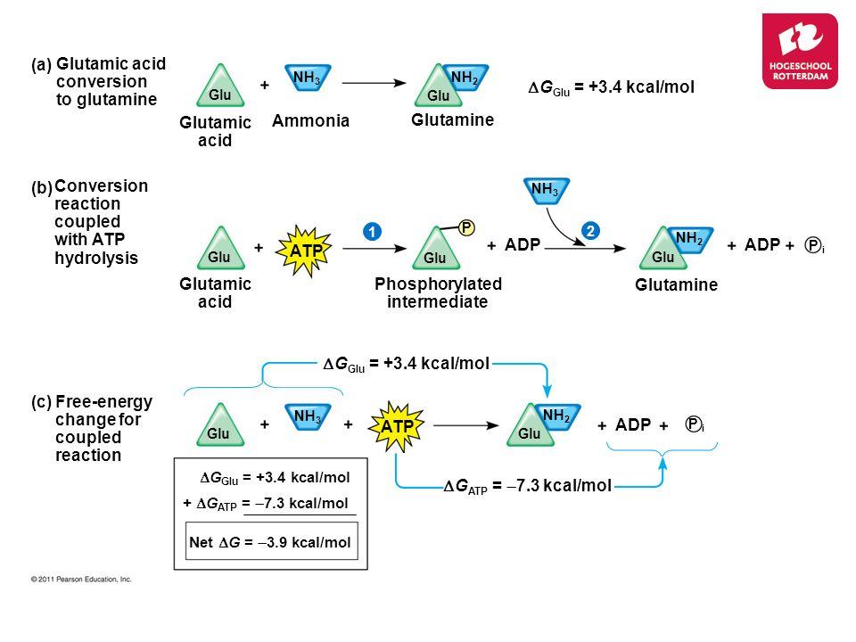 Phosphorylated intermediate