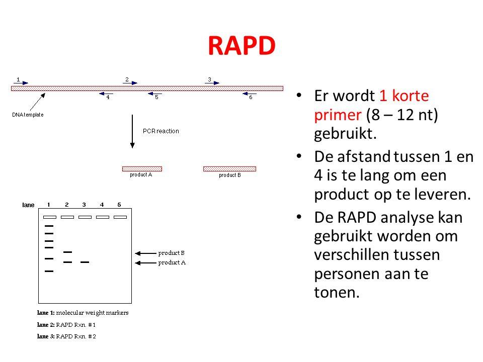 RAPD Er wordt 1 korte primer (8 – 12 nt) gebruikt.
