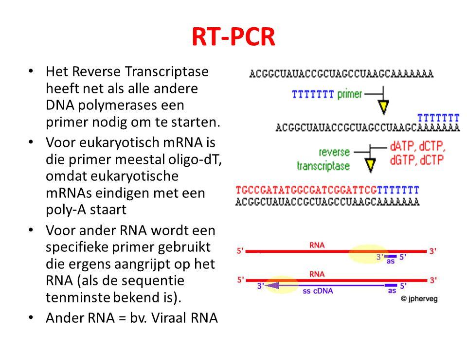 RT-PCR Het Reverse Transcriptase heeft net als alle andere DNA polymerases een primer nodig om te starten.