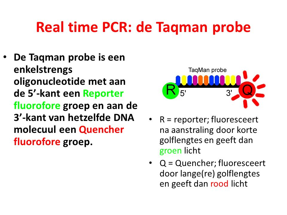 Real time PCR: de Taqman probe
