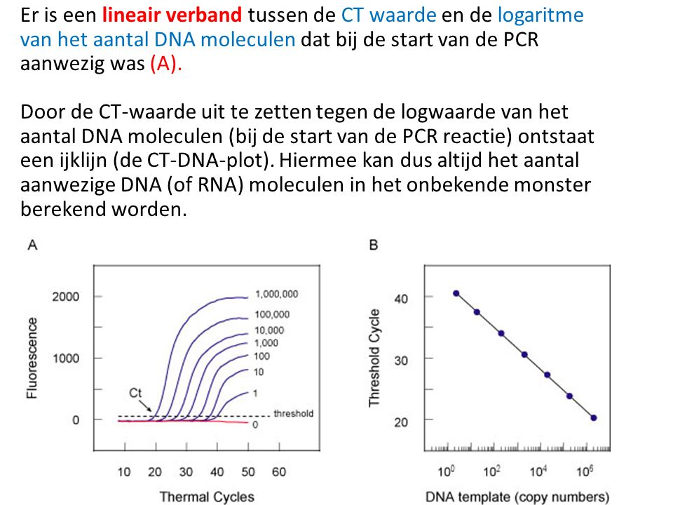 Er is een lineair verband tussen de CT waarde en de logaritme van het aantal DNA moleculen dat bij de start van de PCR aanwezig was (A).