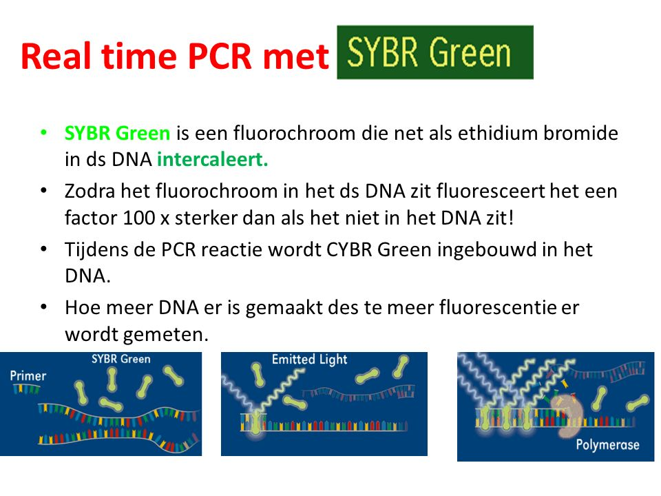 Real time PCR met SYBR Green is een fluorochroom die net als ethidium bromide in ds DNA intercaleert.