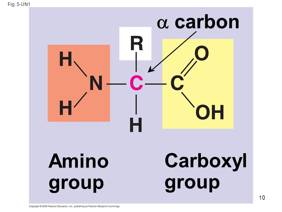 Fig. 5-UN1  carbon Amino group Carboxyl group