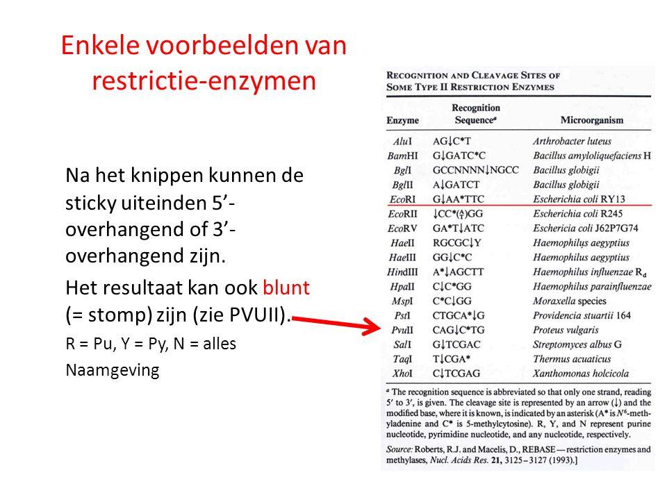 Enkele voorbeelden van restrictie-enzymen