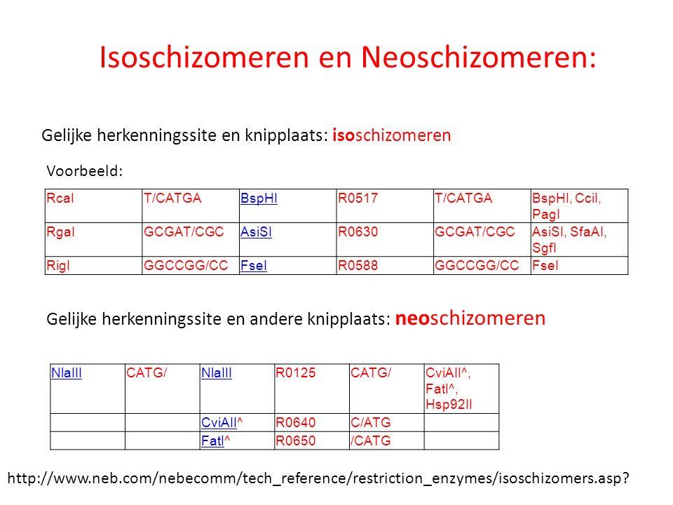 Isoschizomeren en Neoschizomeren: