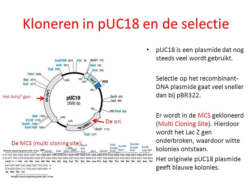 Kloneren in pUC18 en de selectie