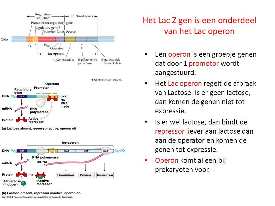 Het Lac Z gen is een onderdeel van het Lac operon
