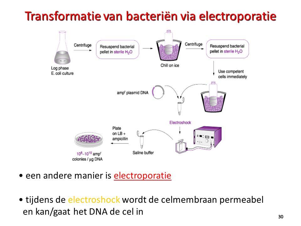 Transformatie van bacteriën via electroporatie