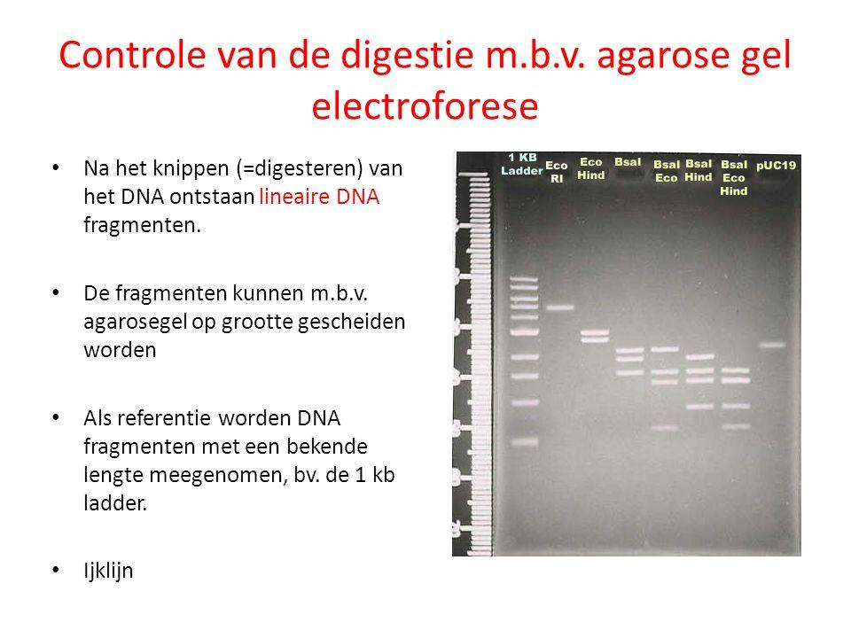 Controle van de digestie m.b.v. agarose gel electroforese