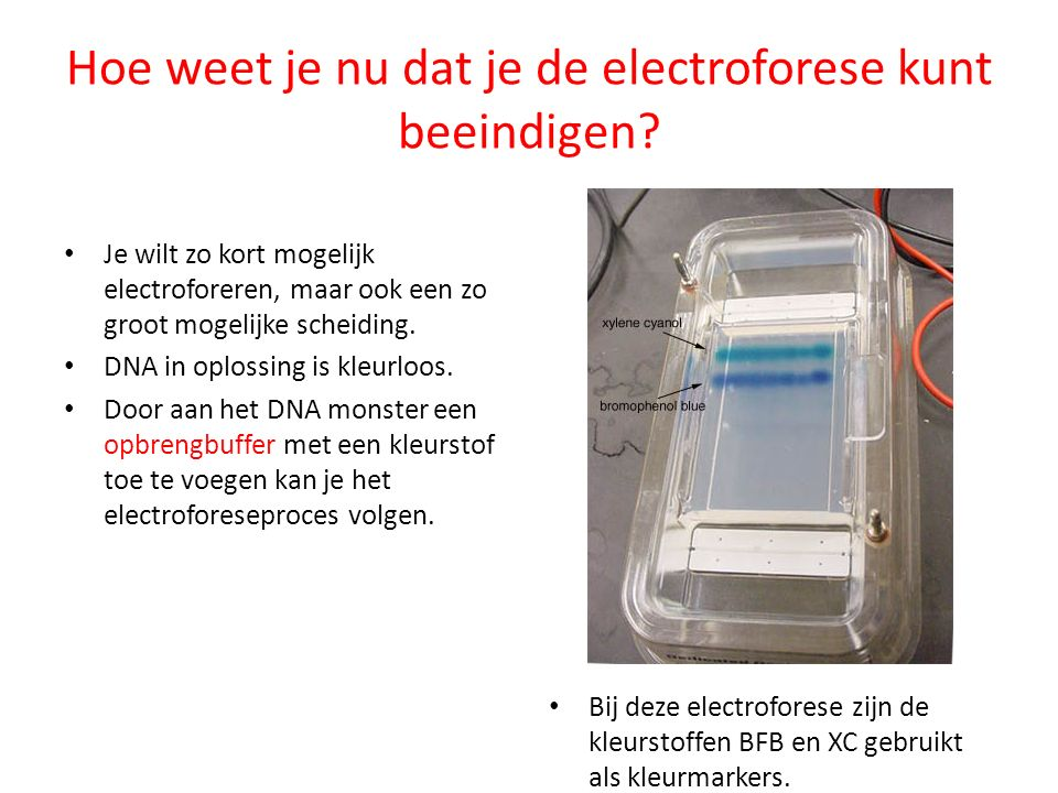 Hoe weet je nu dat je de electroforese kunt beeindigen
