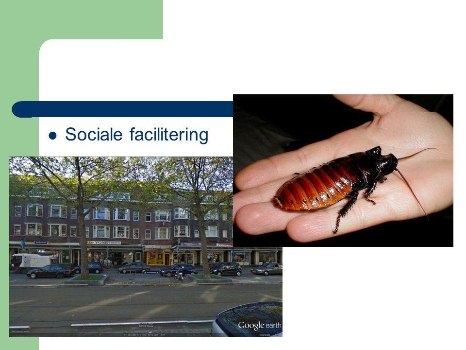 Sociale facilitering
