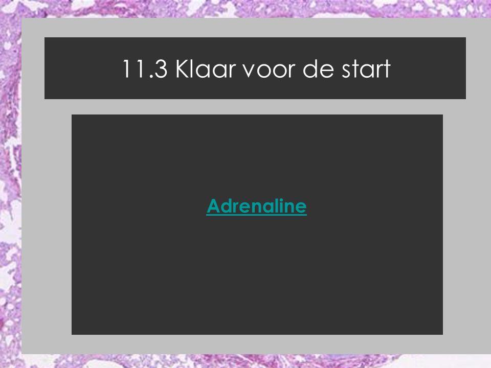 11.3 Klaar voor de start Adrenaline