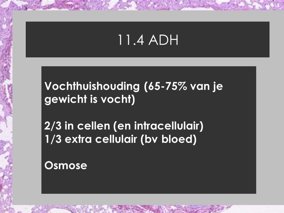 11.4 ADH Vochthuishouding (65-75% van je gewicht is vocht)