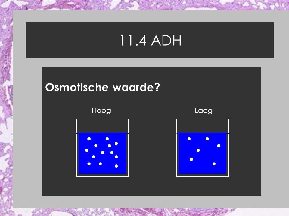 11.4 ADH Osmotische waarde Hoog Laag