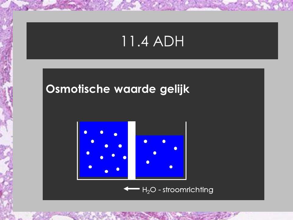 11.4 ADH Osmotische waarde gelijk H2O - stroomrichting