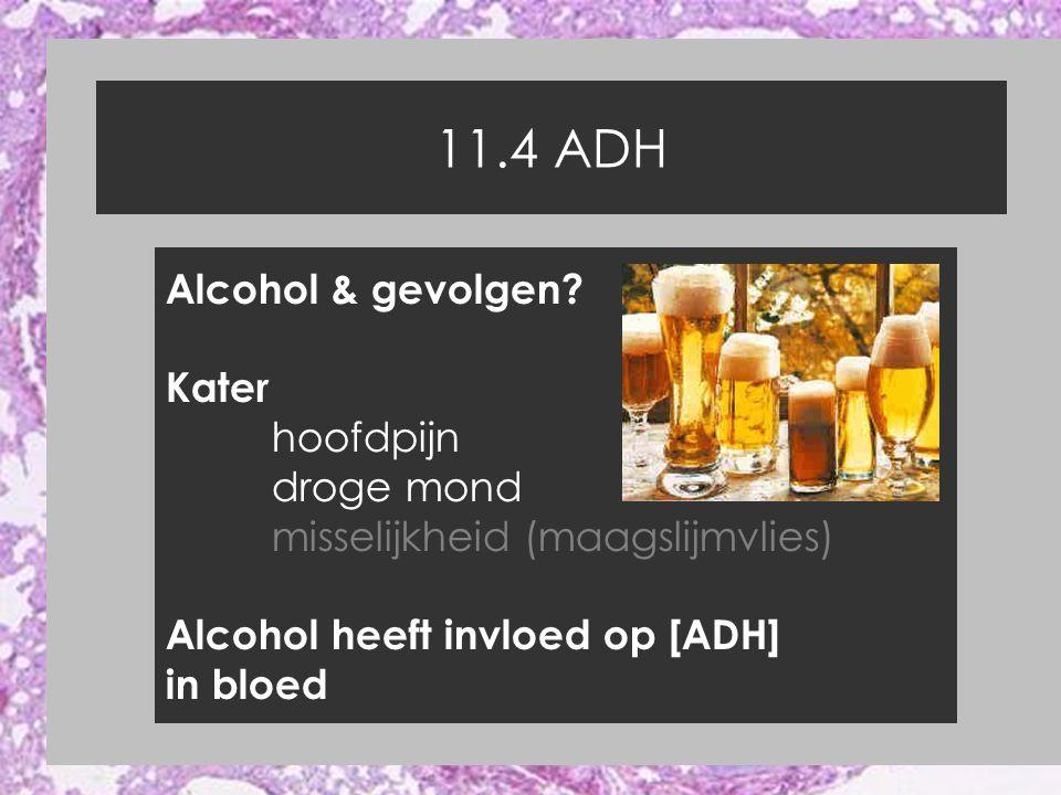 11.4 ADH Alcohol & gevolgen Kater hoofdpijn droge mond