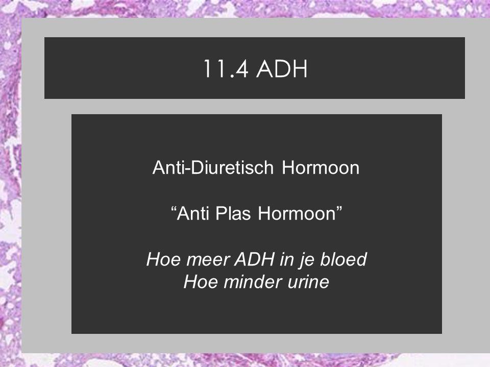 Anti-Diuretisch Hormoon