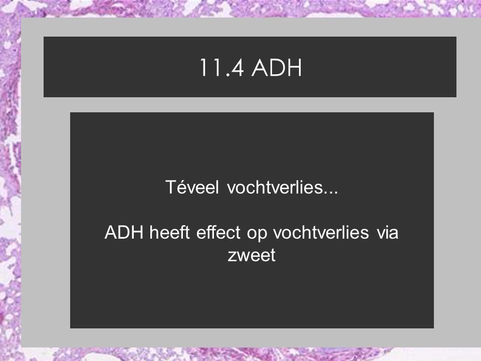ADH heeft effect op vochtverlies via