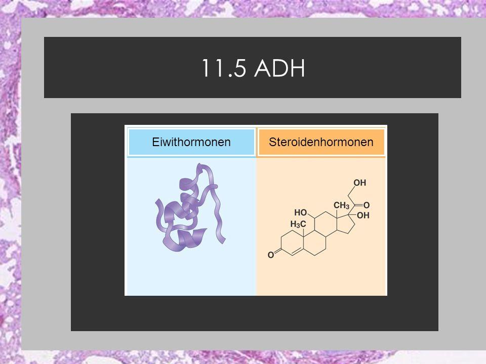 11.5 ADH Eiwithormonen Steroidenhormonen