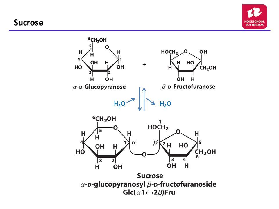Sucrose + H2O H2O