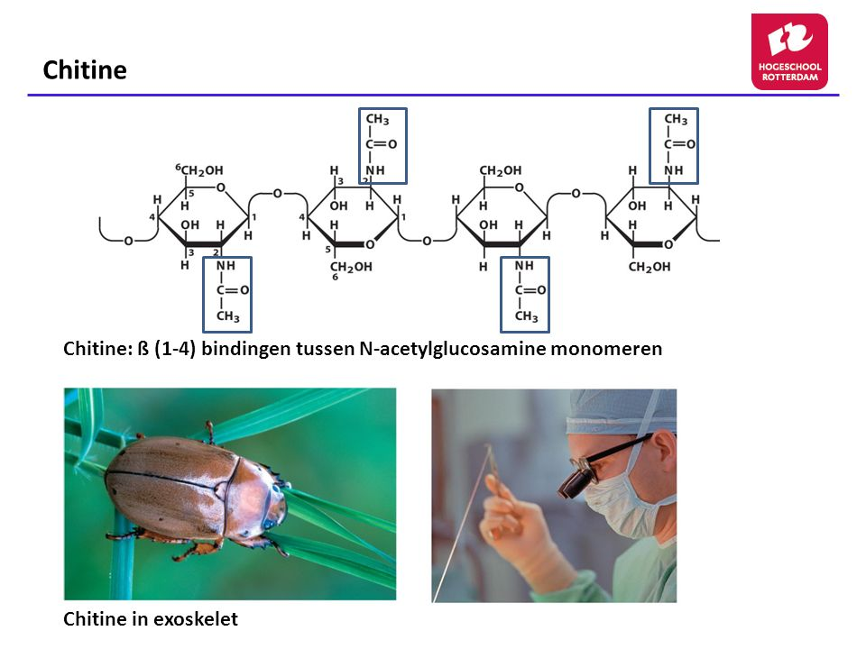 Chitine Chitine: ß (1-4) bindingen tussen N-acetylglucosamine monomeren Chitine in exoskelet