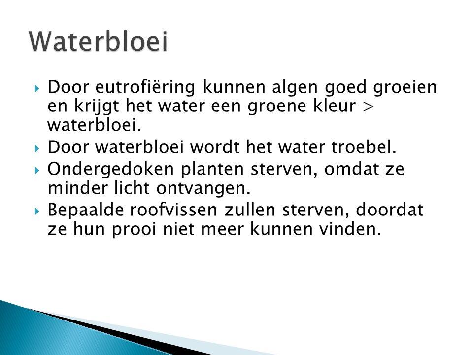 Waterbloei Door eutrofiëring kunnen algen goed groeien en krijgt het water een groene kleur > waterbloei.