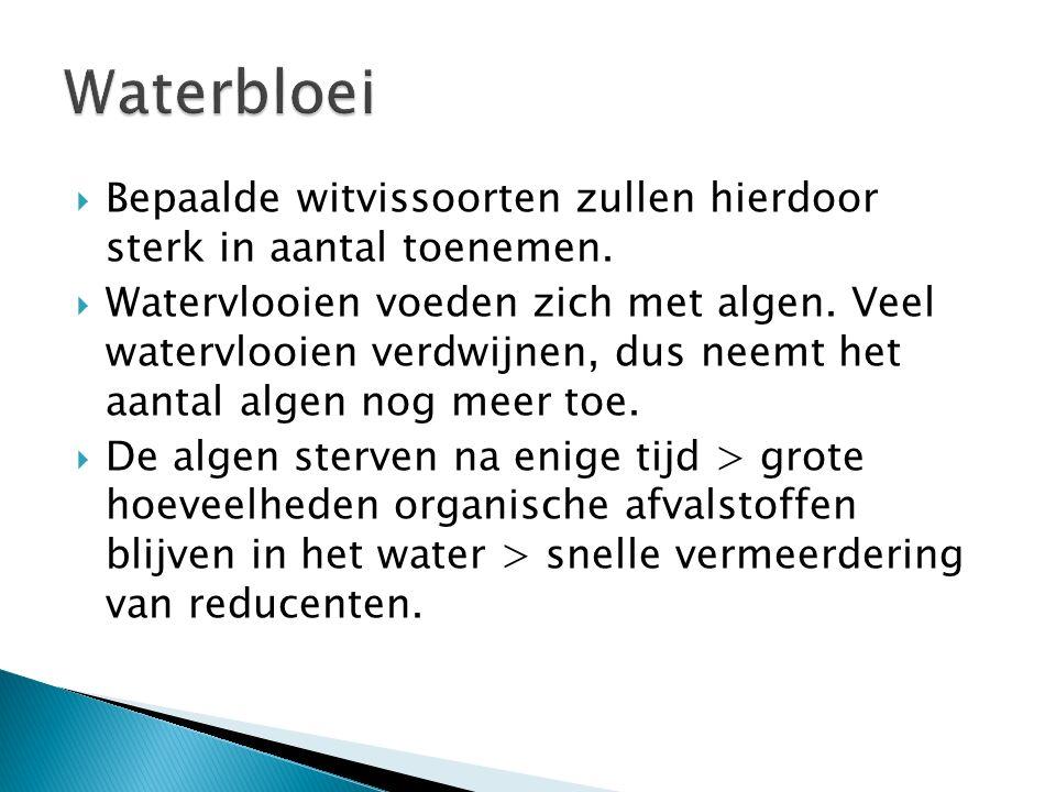 Waterbloei Bepaalde witvissoorten zullen hierdoor sterk in aantal toenemen.
