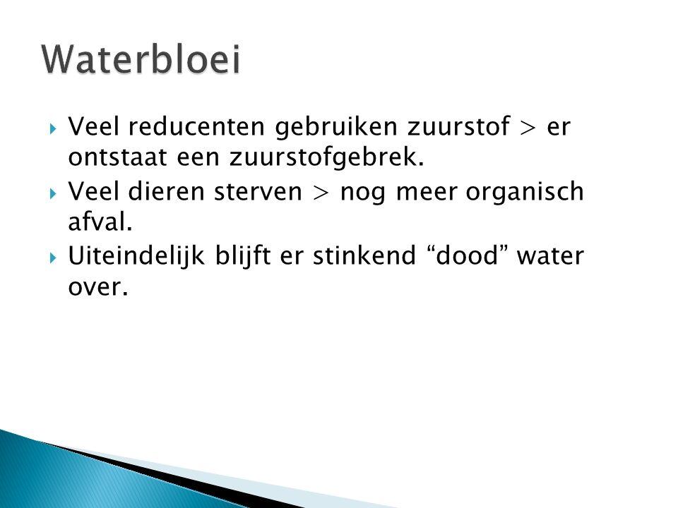 Waterbloei Veel reducenten gebruiken zuurstof > er ontstaat een zuurstofgebrek. Veel dieren sterven > nog meer organisch afval.