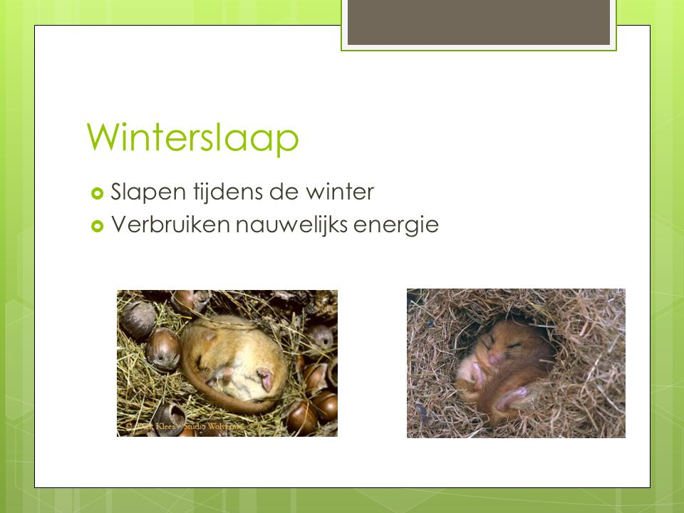 Winterslaap Slapen tijdens de winter Verbruiken nauwelijks energie