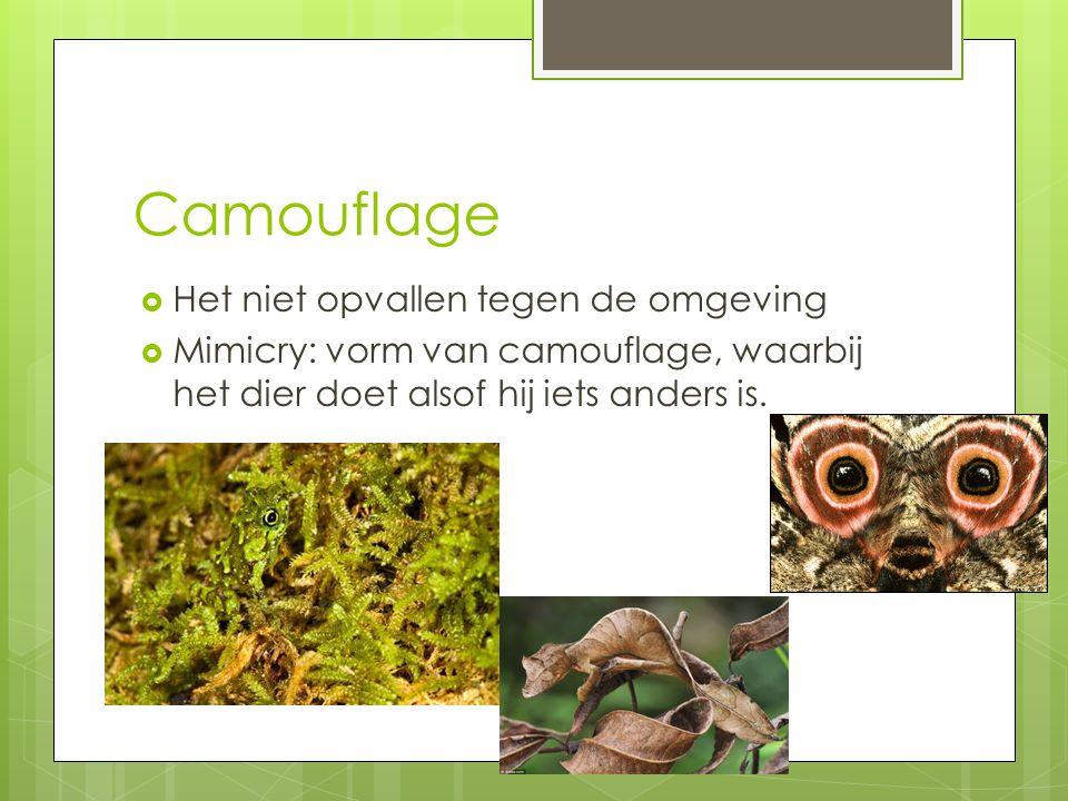 Camouflage Het niet opvallen tegen de omgeving
