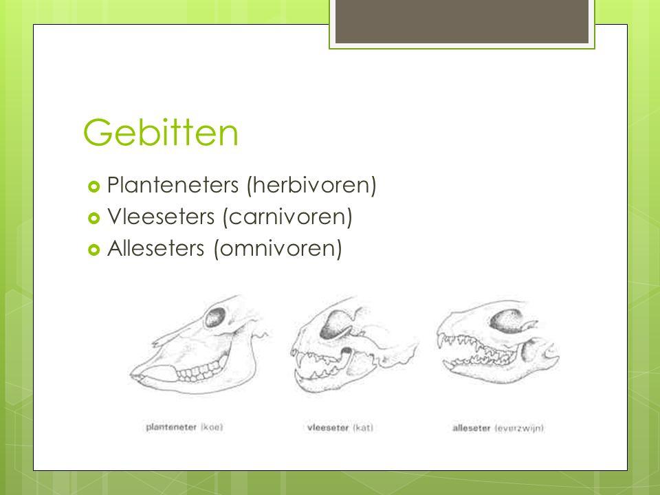 Gebitten Planteneters (herbivoren) Vleeseters (carnivoren)
