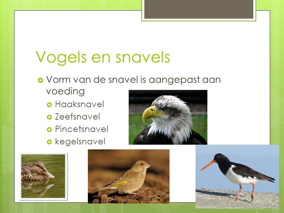 Vogels en snavels Vorm van de snavel is aangepast aan voeding