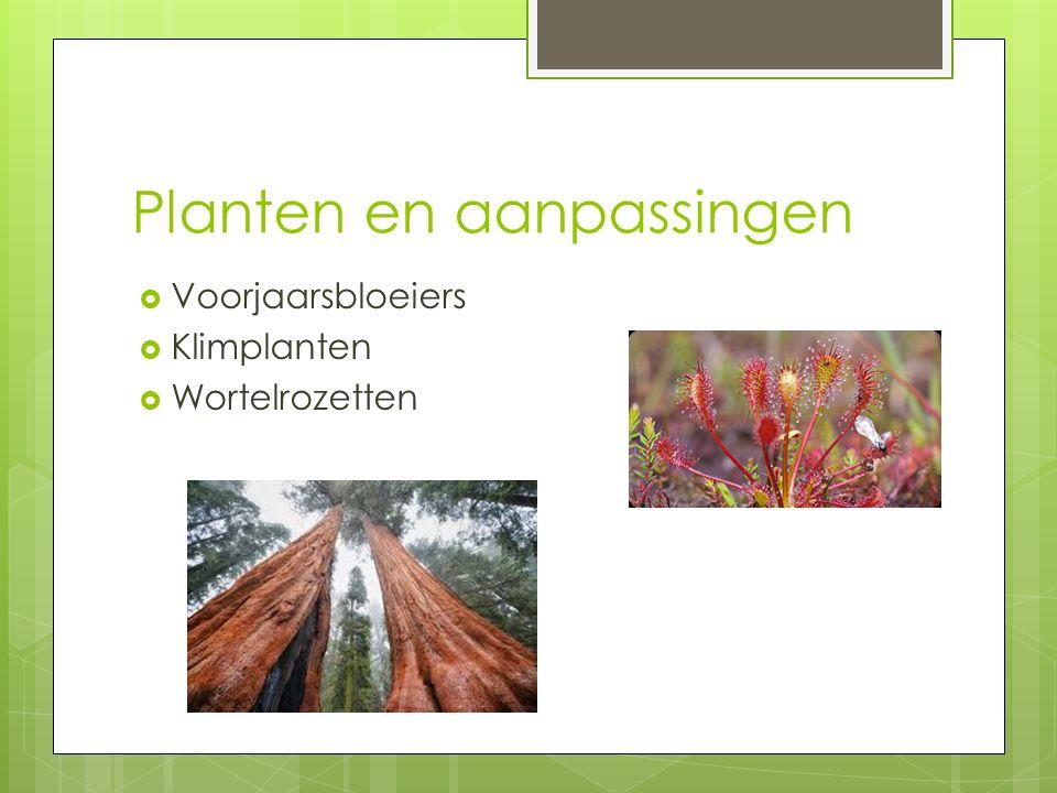 Planten en aanpassingen