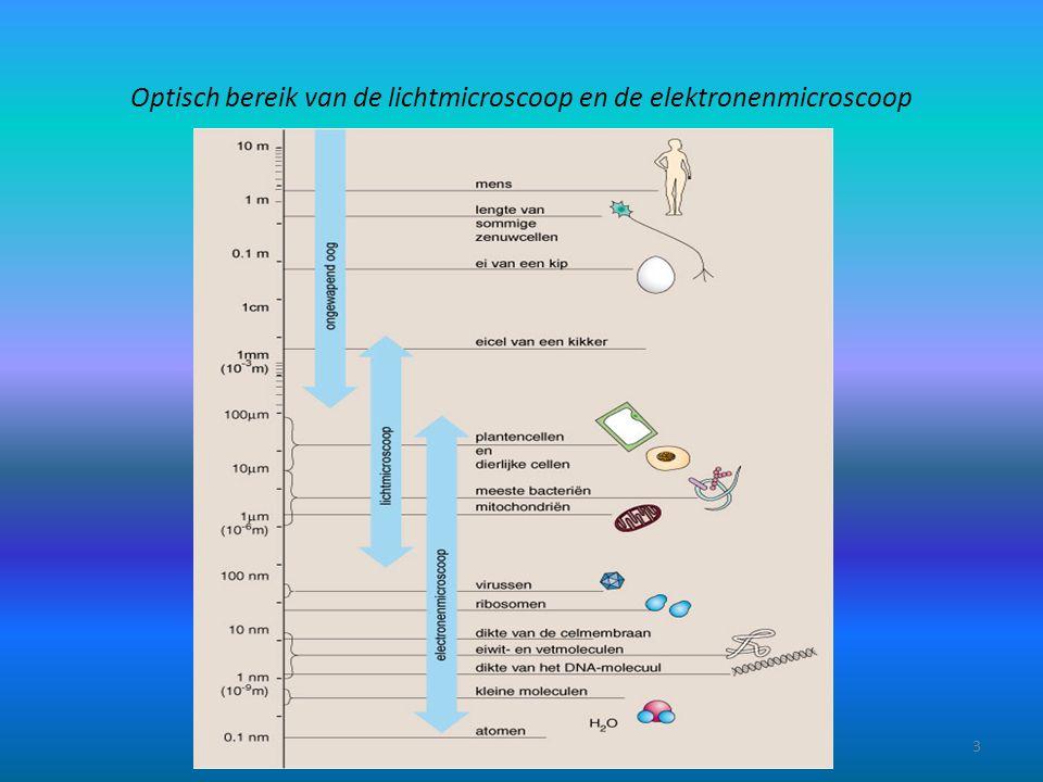 Optisch bereik van de lichtmicroscoop en de elektronenmicroscoop
