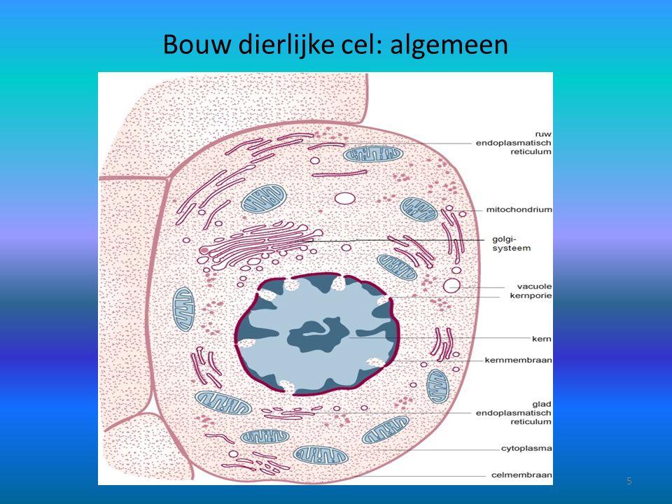 Bouw dierlijke cel: algemeen