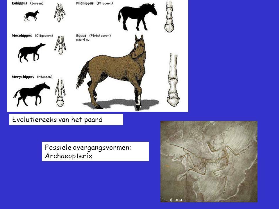 Evolutiereeks van het paard