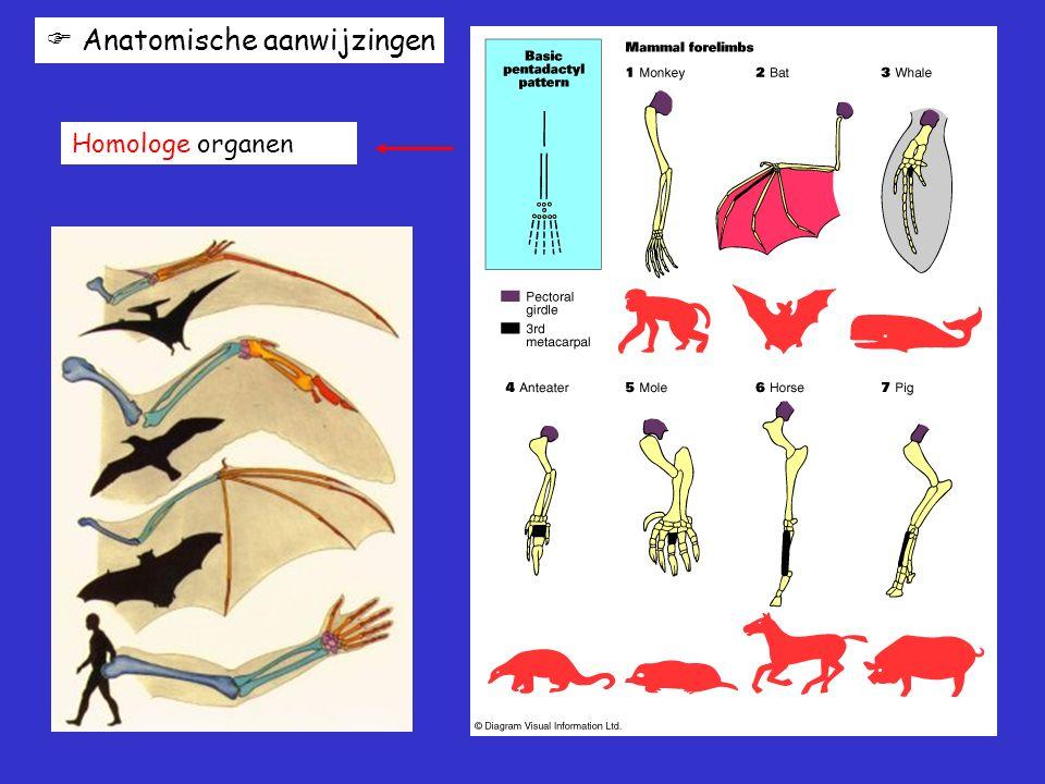  Anatomische aanwijzingen