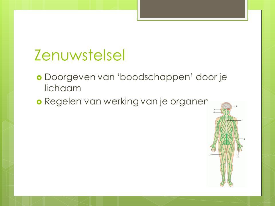 Zenuwstelsel Doorgeven van 'boodschappen' door je lichaam