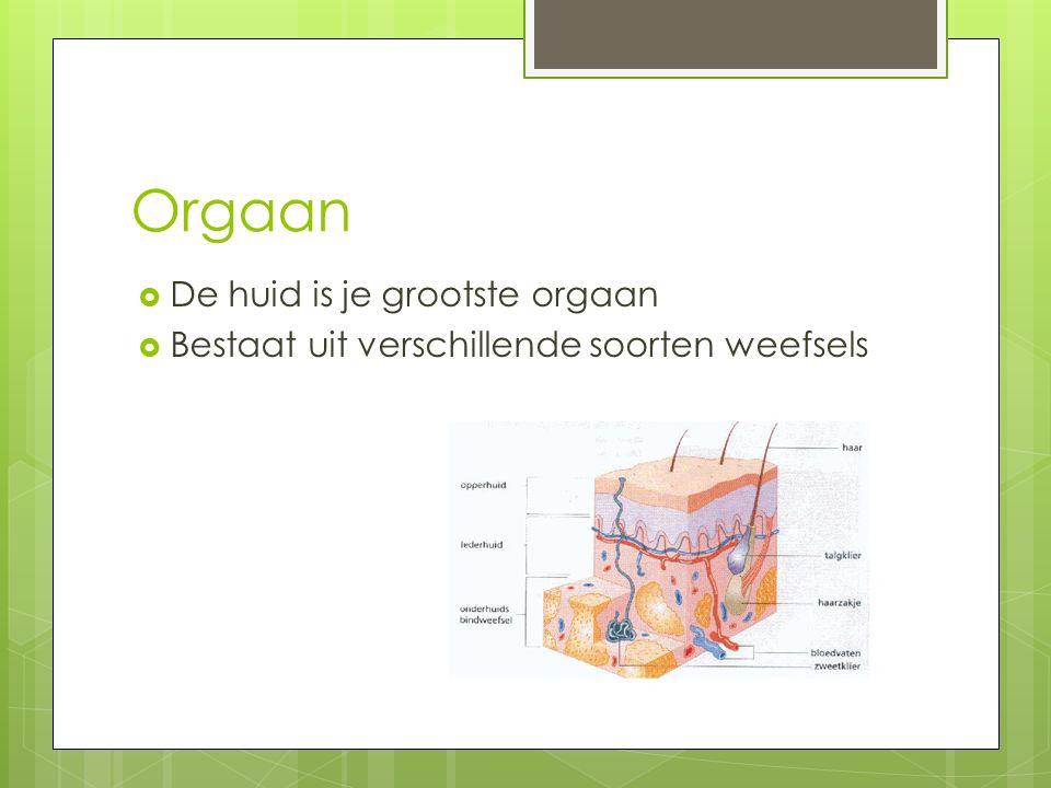 Orgaan De huid is je grootste orgaan