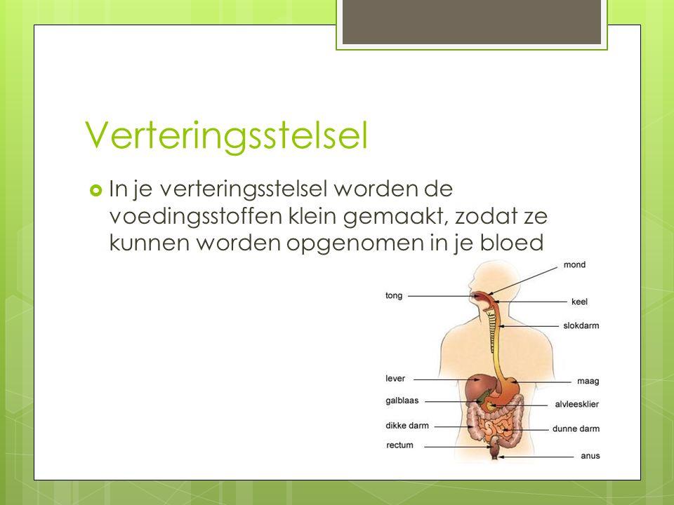 Verteringsstelsel In je verteringsstelsel worden de voedingsstoffen klein gemaakt, zodat ze kunnen worden opgenomen in je bloed.