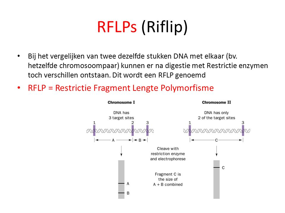 RFLPs (Riflip) RFLP = Restrictie Fragment Lengte Polymorfisme
