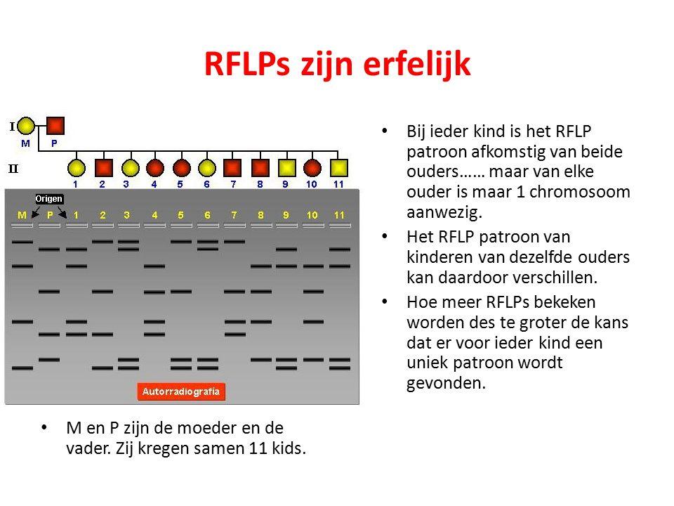 RFLPs zijn erfelijk M en P zijn de moeder en de vader. Zij kregen samen 11 kids.