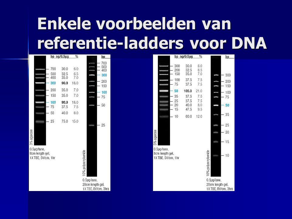 Enkele voorbeelden van referentie-ladders voor DNA