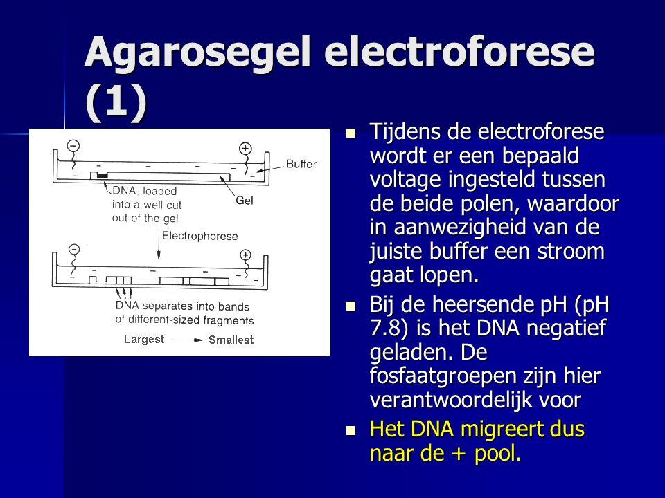 Agarosegel electroforese (1)